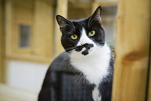 Black and White Cat Enjoying A Stay at Mobberley Cattery