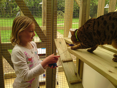 Child Playing with Cat at Mobberley Cottage Cattery