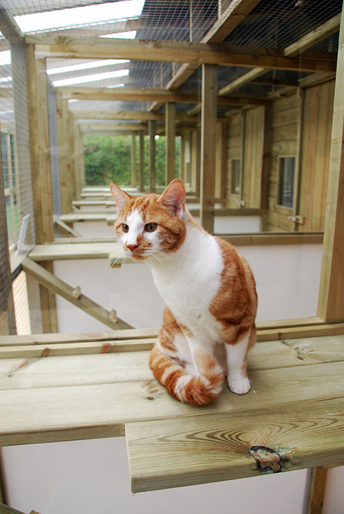Cat in Accommodation at Mobberley Cattery