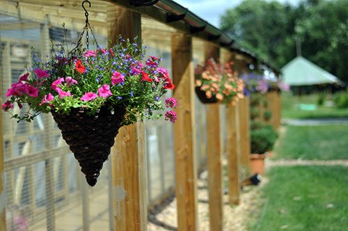 Hanging Baskets at the Cattery at Summer
